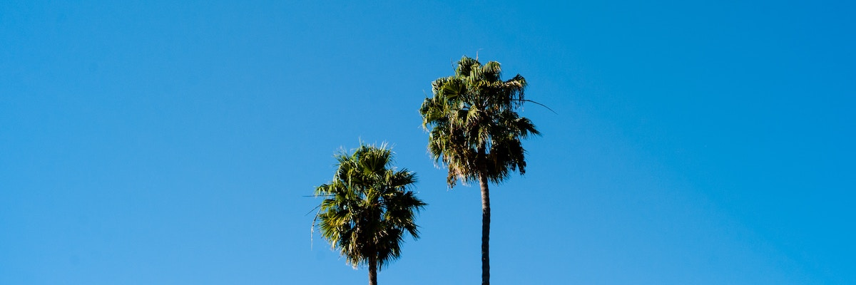 Palm trees in California, where Morgan Stanley broker Kevin C. Yang operated.